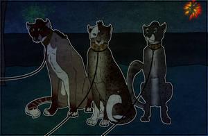 YSH - Waiting like a good cat by Jian89