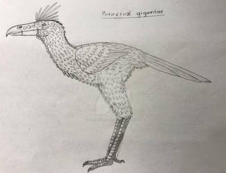 Paradox Island: Paracrax gigantea