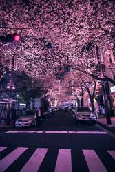 dreamy petals