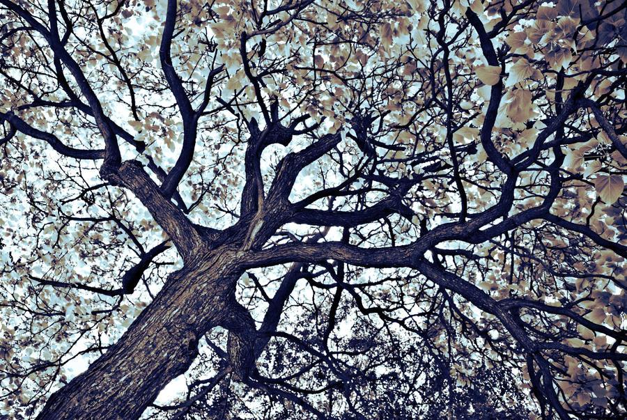 The Farley Faerie Tree by NoelleLaBelle