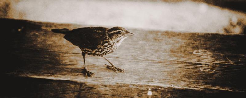 Little Bird by NoelleLaBelle