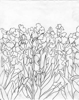Kosatce (arboretum) Kveten 15