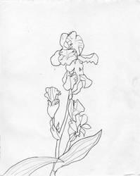 Iris Kveten 15 by dalimilelingvlach