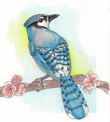 Blue Jay by CrockCHOKO