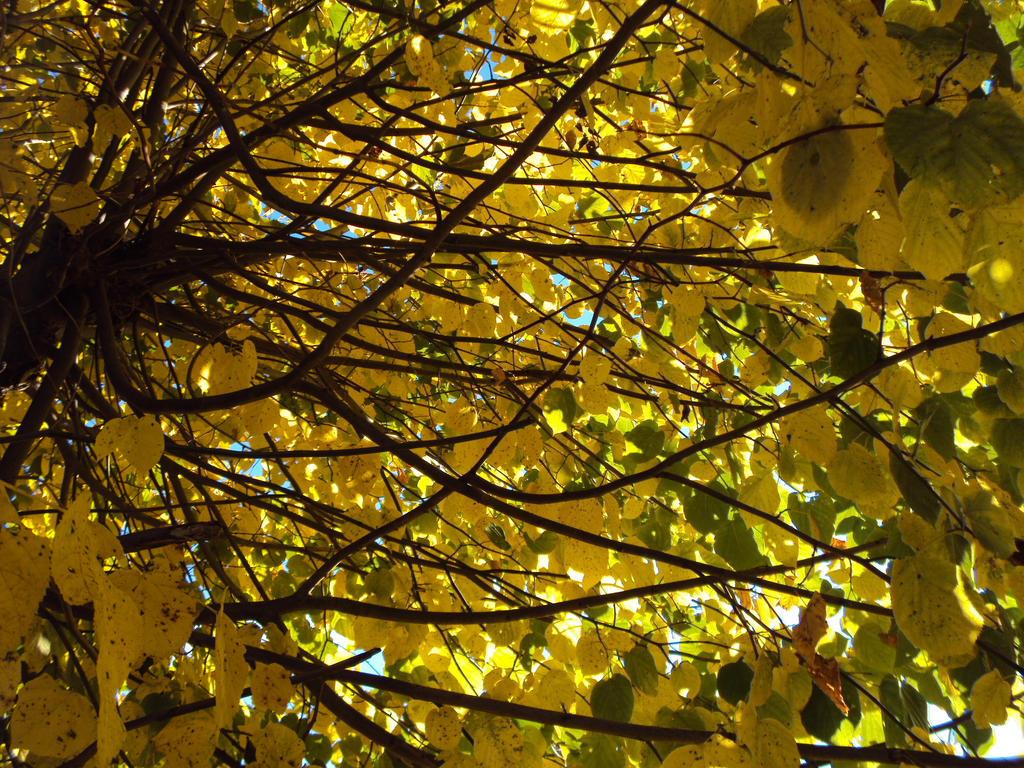 Swedish autumn#12 by Kramttin