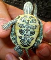 little turtle by saeeda