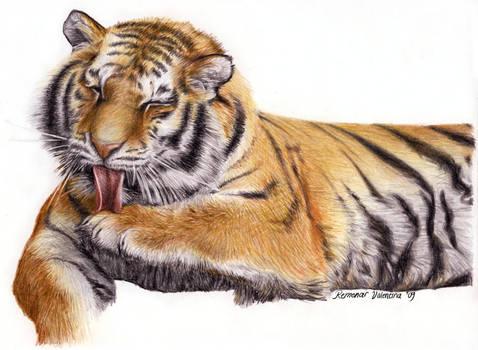 Tiger by Valentina