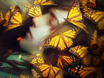 Sleeping With Butterflies