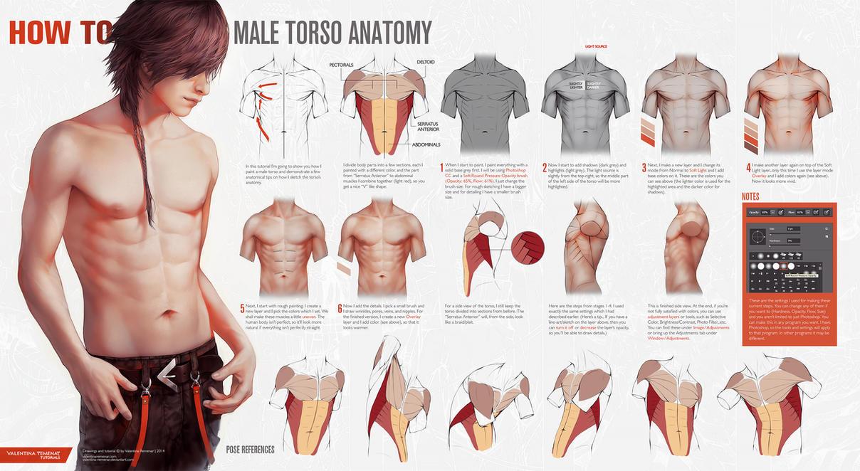 HOW TO: Male Torso Anatomy by Valentina-Remenar