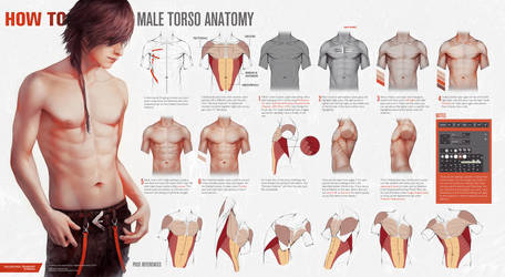 HOW TO: Male Torso Anatomy by Valentina-Remenar