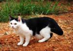 Cat by Sonia-Rebelo