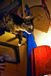 Cleo The Cat 2