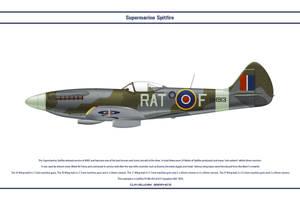 Spitfire Mk XIV 613 Sqn RAF by WS-Clave