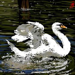 swan shpeedie