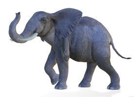 Elephant 2 PNG by Variety-Stock