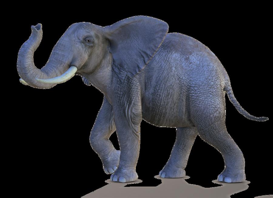 صور فيله صور فيله للتصميم صور فيله png صور فيله elephant_2_png_by_variety_stock.png