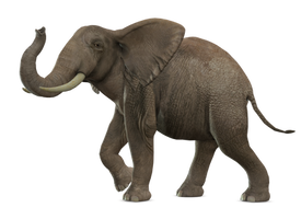 Elephant 4 PNG by Variety-Stock