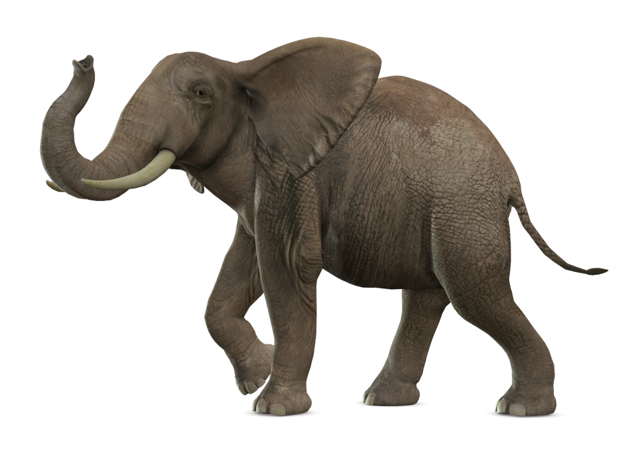 Elephant 4 Png By Variety Stock On Deviantart