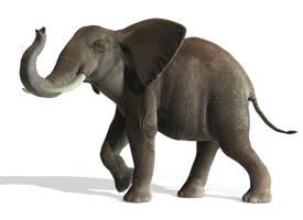 Elephant 5 PNG by Variety-Stock
