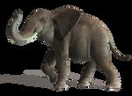 Elephant 5 PNG