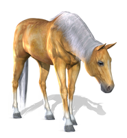 Horse 1 PNG by Variety-Stock