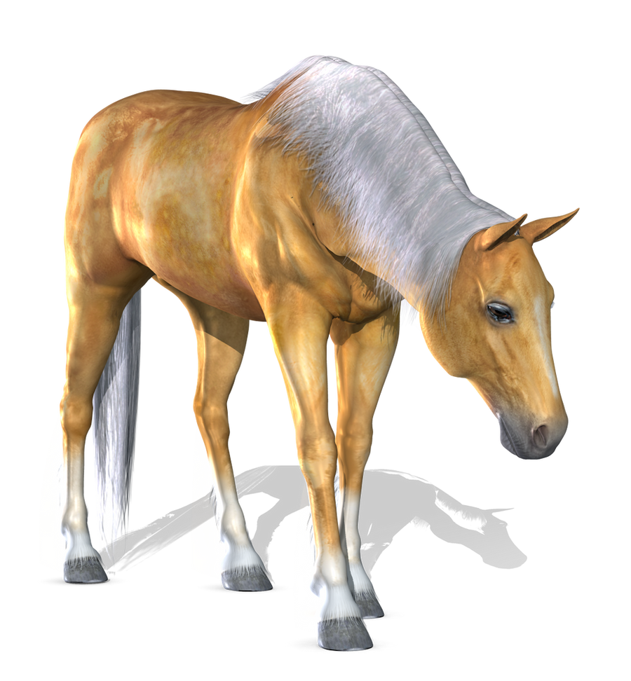 Horse 1 PNG by Variety Stock