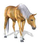 Horse 1 PNG