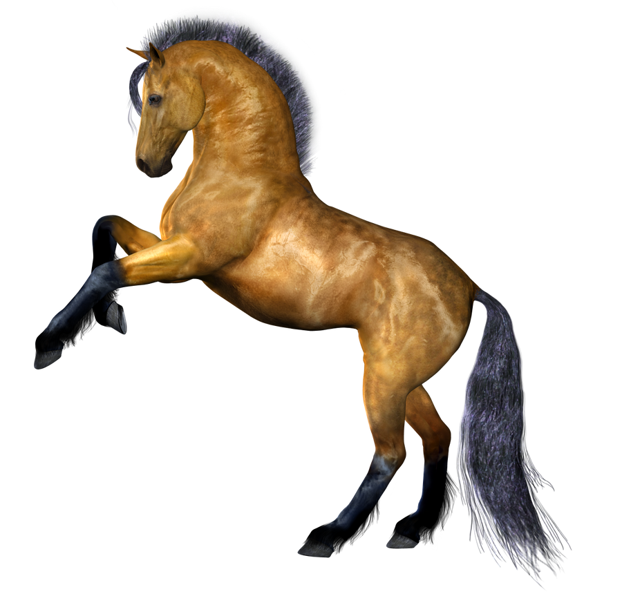 http://variety-stock.deviantart.com/art/Horse-4-PNG-176951276