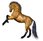 Horse 4 PNG
