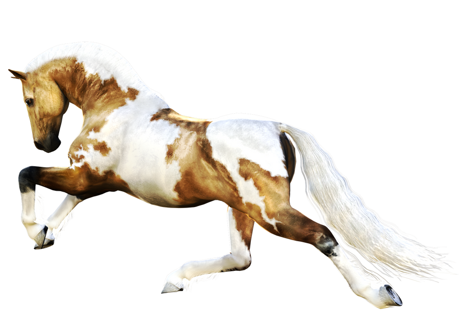 Horse 7 PNG by Variety-Stock