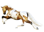 Horse 7 PNG