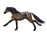 Horse 9 PNG