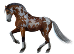 Horse 10 PNG