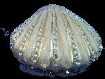 Sparkling Seashell