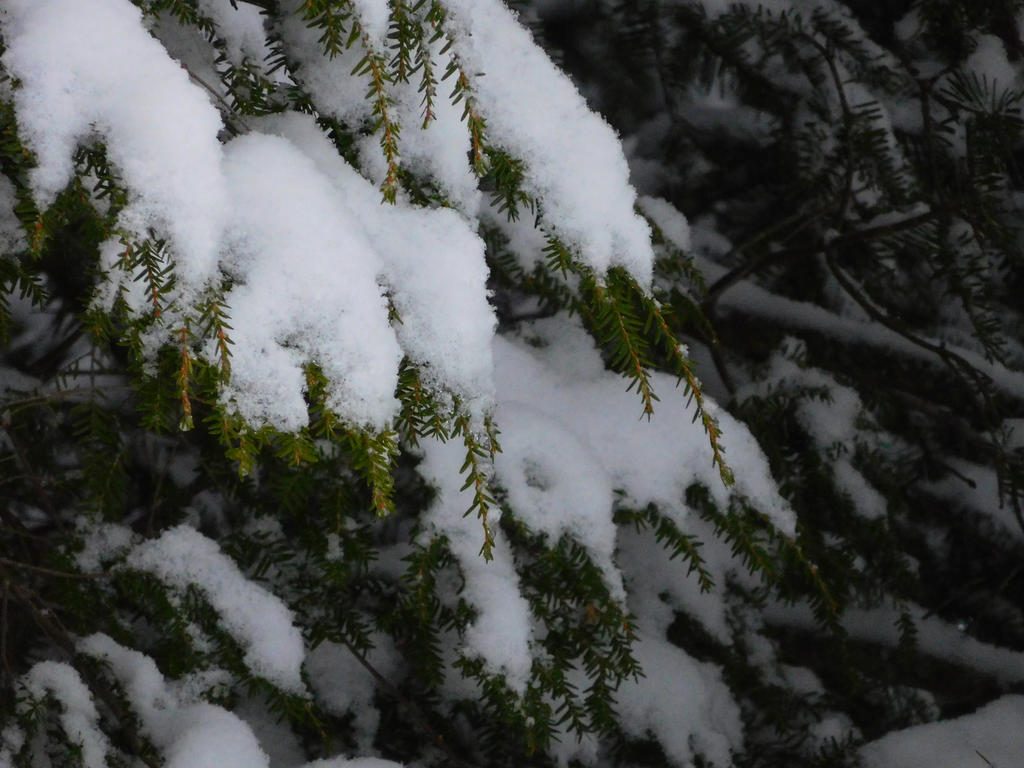 Pine by Paper-Tea
