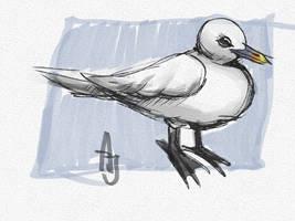 Ivory Gull - day 21 #avianaugust