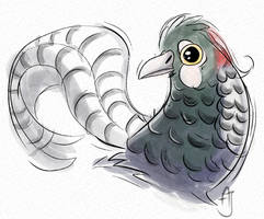 Lady Amherst's pheasant - day 22 #avianaugust
