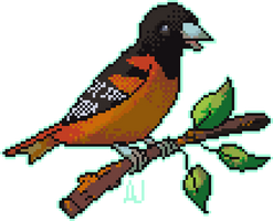 Baltimore Oriole - Day 29 #avianaugust