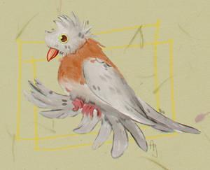 Trumpeter Pigeon - day 31