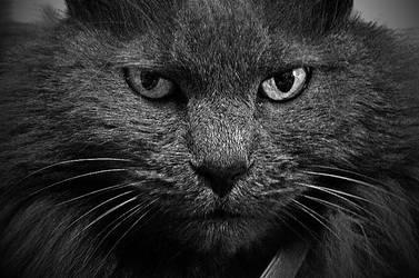 Inner Lion