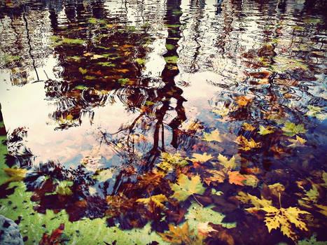 autumn XXIII