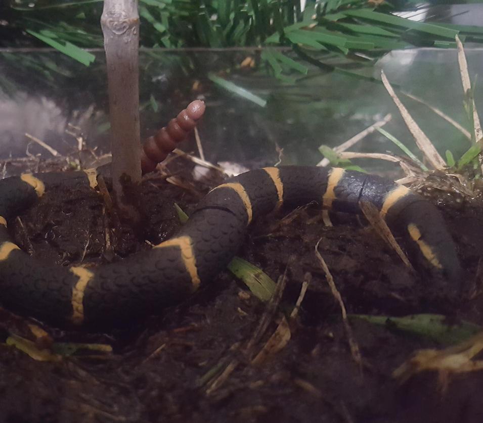 snake paradise by animaldiorama on deviantart