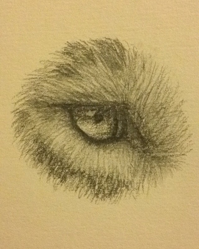 Leopard's Eye -- Fur and Eye Practice by Leopardwisker