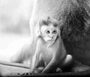 Baby Mon by HMsa