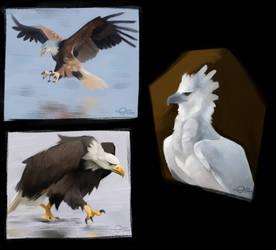 Eagle Studies