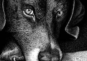 Dog Day in Pen by ronmonroe