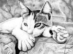 Greek Kitty in Pen