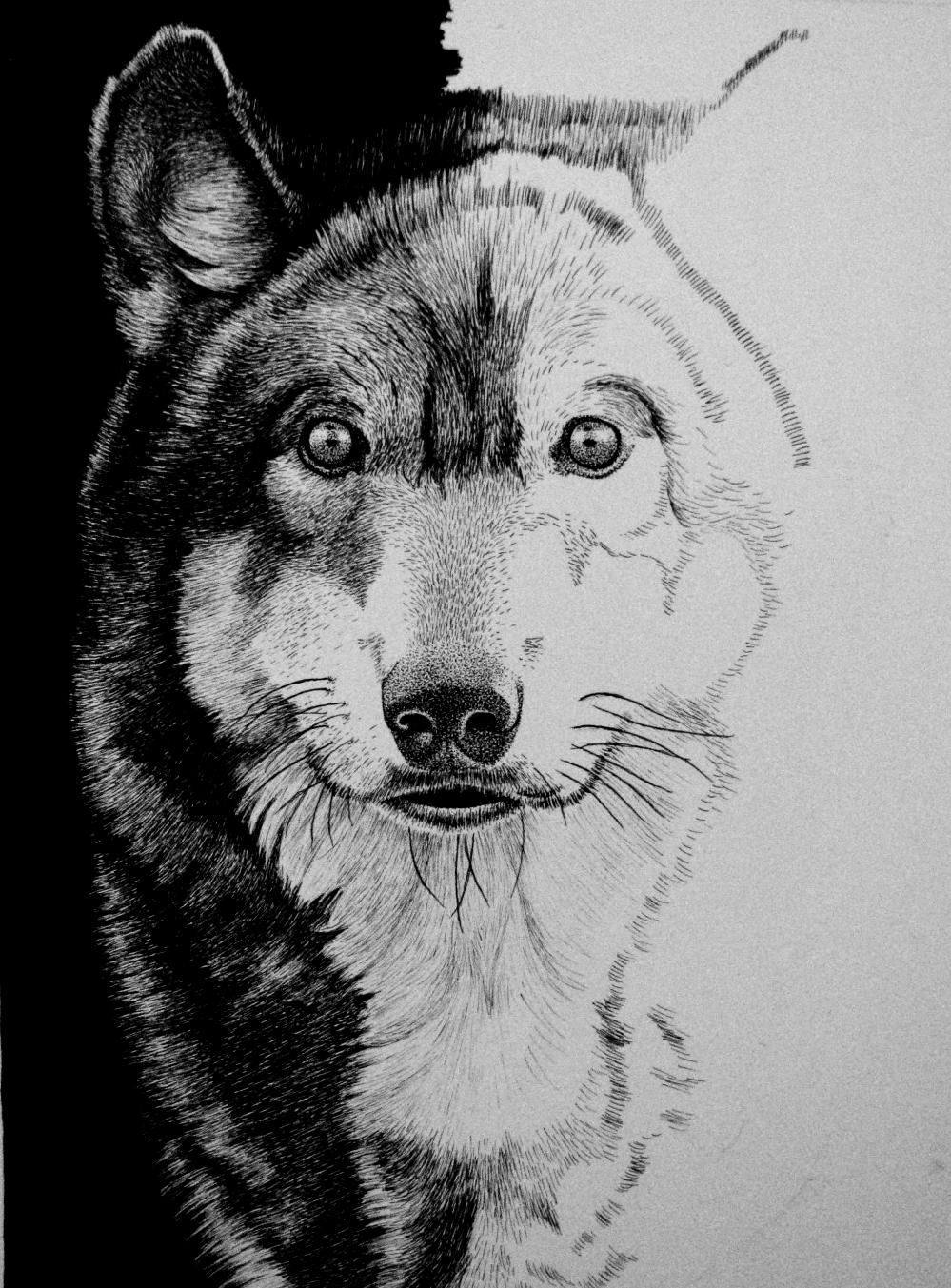 WIP 3 Wolf by ronmonroe