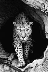 Leopard In A Log by ronmonroe