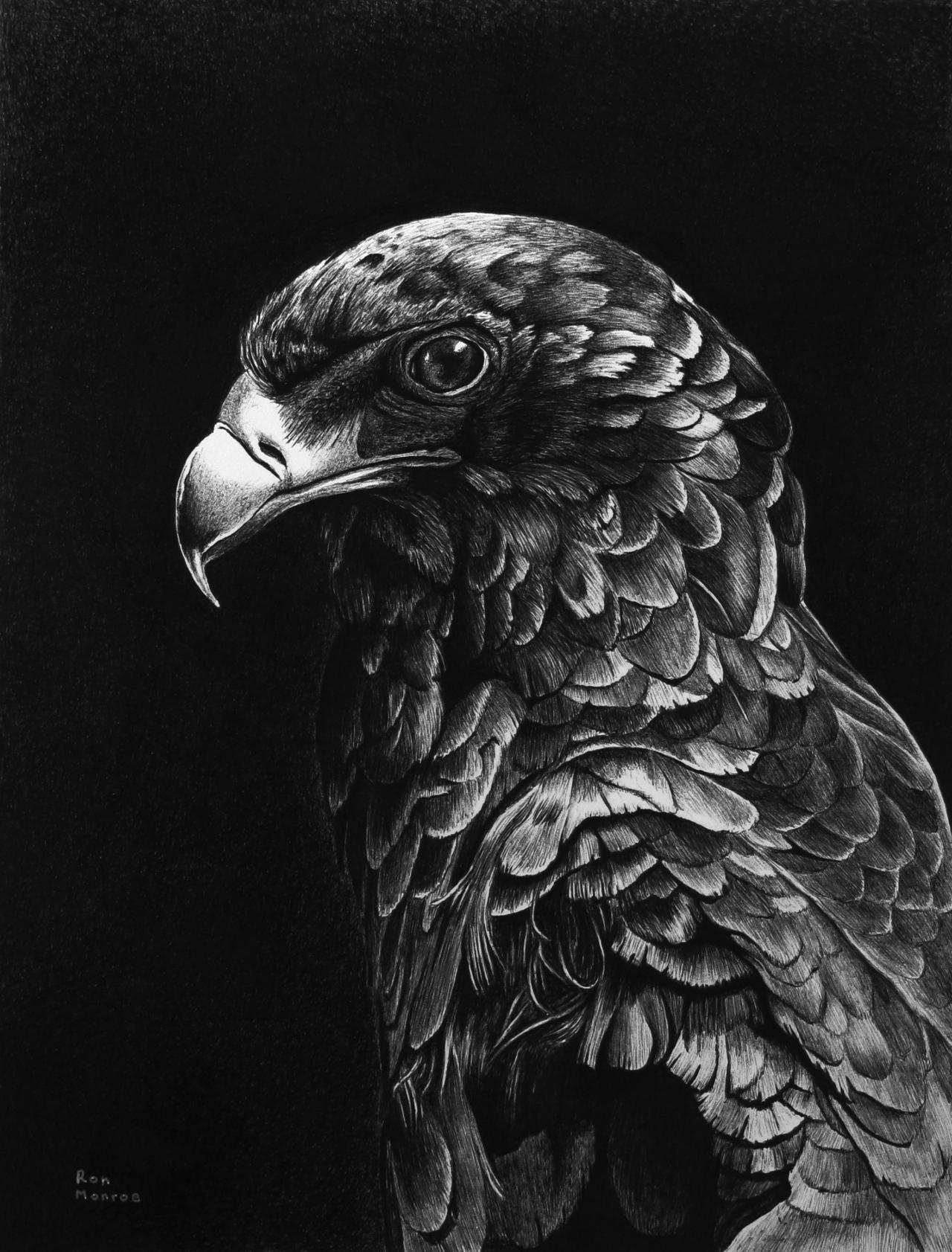 Bateleur Eagle in Ballpoint Pen